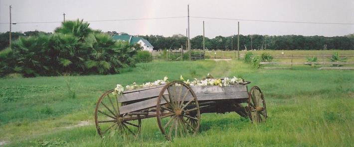 wagon710x296